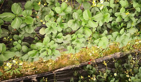 西宁市:机制创新促进农业残膜回收利用